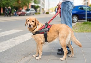 You are also helping to protect individuals who rely on service animals to perform essential, life-saving tasks.