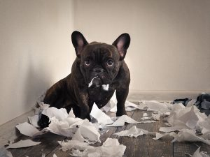 Is your dog really to blame for you being late to work?